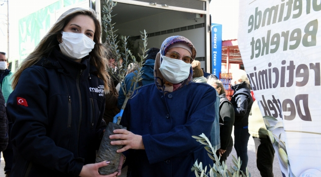 10 Günde 14 Bin 500 Adet Zeytin Fidanı Dağıtıldı